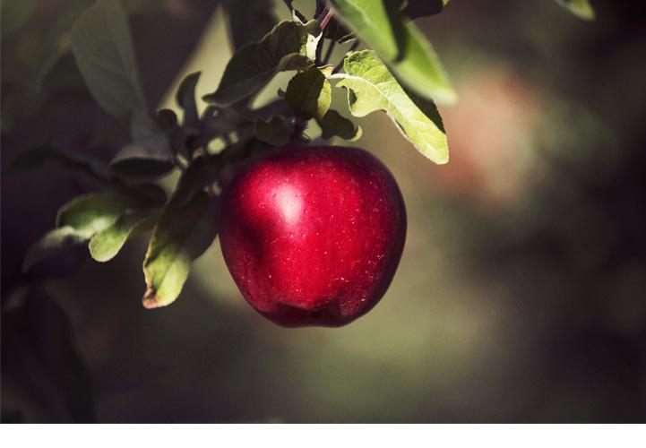 apple-picker-story-6