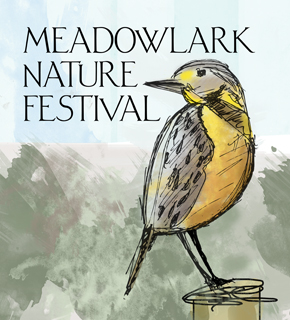 Picture of a meadowlark. Okanagan and Similkameen Valley Meadowlark Nature Festival for 2013. Runs between May 16 to May 20.