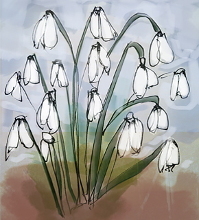 Illustration of snowdrops
