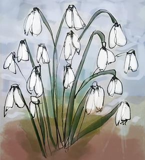 Illustration of snowdrops