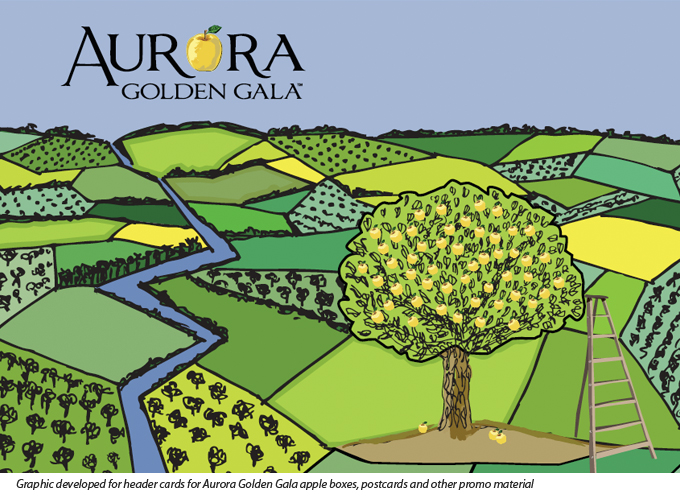 Aurora Golden Gala graphics developed as part of the Born in BC. Raised in the Okanagan campaign
