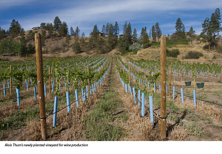 Vineyard planted by Alois Thurn for product line