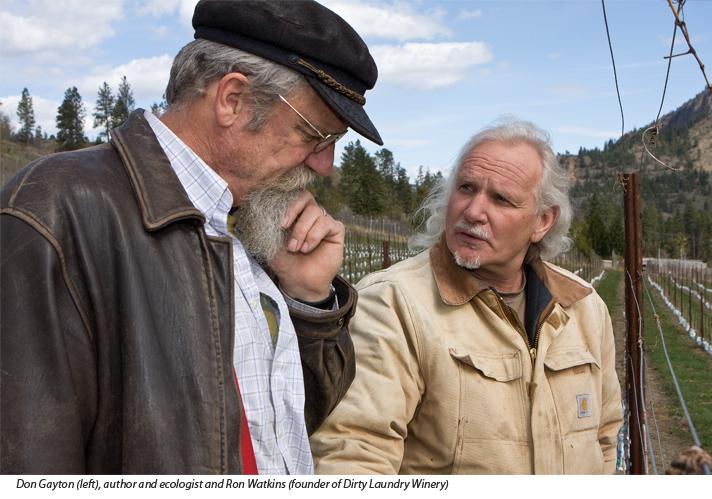 Don Gayton and Ron Watkins in vineyard