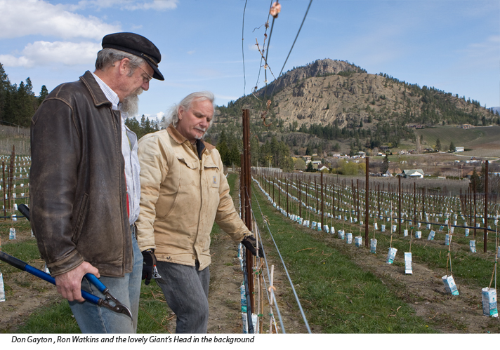 Ron Watkins and Don Gayton in vineyard