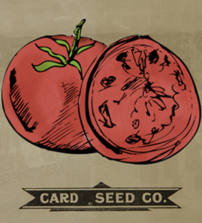 Seeds Glorious Seeds article by Kim Stansfield
