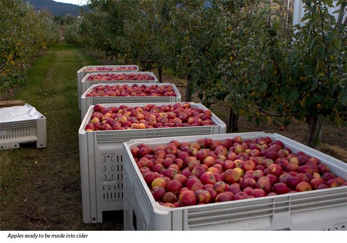 Summerland Heritage Cider company, Summerland, BC cider apples