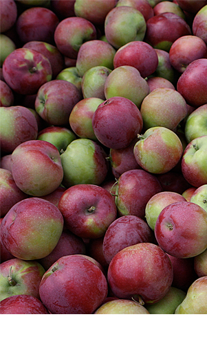 Shipment of apples in Summerland Packing House